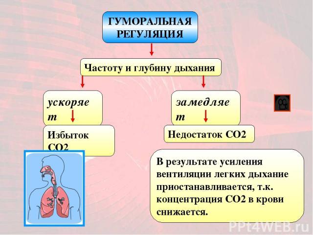 ГУМОРАЛЬНАЯ РЕГУЛЯЦИЯ Частоту и глубину дыхания ускоряет Избыток CO2 замедляет Недостаток CO2 В результате усиления вентиляции легких дыхание приостанавливается, т.к. концентрация CO2 в крови снижается.