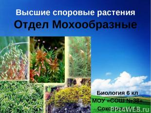 Высшие споровые растения Отдел Мохообразные Биология 6 кл МОУ «СОШ №38» Соколова