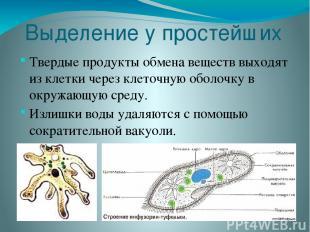Выделение у простейших Твердые продукты обмена веществ выходят из клетки через к