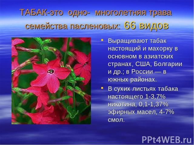 ТАБАК-это одно- многолетняя трава семейства пасленовых: 66 видов Выращивают табак настоящий и махорку в основном в азиатских странах, США, Болгарии и др.; в России — в южных районах. В сухих листьях табака настоящего 1-3,7% никотина, 0,1-1,37% эфирн…
