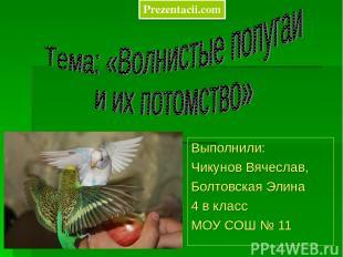 Выполнили: Чикунов Вячеслав, Болтовская Элина 4 в класс МОУ СОШ № 11 Prezentacii