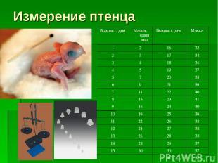 Измерение птенца Возраст, дни Масса, граммы Возраст, дни Масса 1 2 16 32 2 3 17