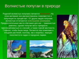 Волнистые попугаи в природе Родиной волнистых попугаев считается Австралия. На э