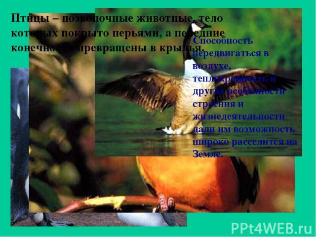 Птицы – позвоночные животные, тело которых покрыто перьями, а передние конечности превращены в крылья. Способность передвигаться в воздухе, теплокровность и другие особенности строения и жизнедеятельности дали им возможность широко расселится на Земле.