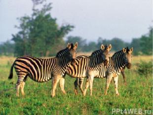 Растительноядные млекопитающие