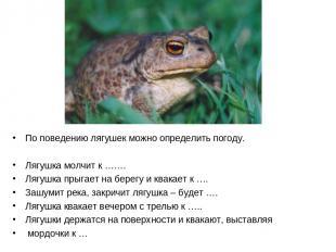 По поведению лягушек можно определить погоду. Лягушка молчит к ……. Лягушка прыга
