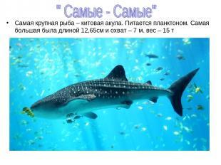 Самая крупная рыба – китовая акула. Питается планктоном. Самая большая была длин