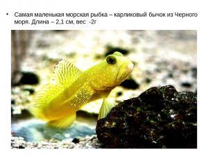 Самая маленькая морская рыбка – карликовый бычок из Черного моря. Длина – 2,1 см