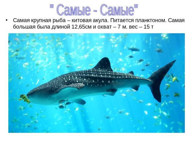 Самая крупная рыба – китовая акула. Питается планктоном. Самая большая была длиной 12,65см и охват – 7 м. вес – 15 т