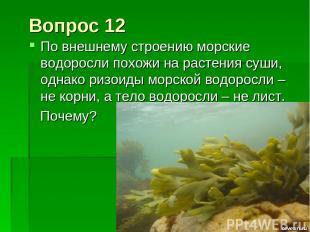 Вопрос 12 По внешнему строению морские водоросли похожи на растения суши, однако