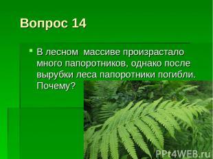 Вопрос 14 В лесном массиве произрастало много папоротников, однако после вырубки