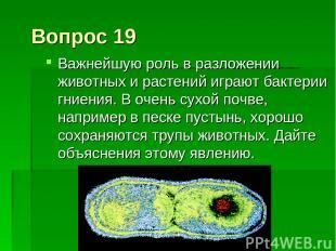 Вопрос 19 Важнейшую роль в разложении животных и растений играют бактерии гниени