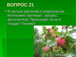 ВОПРОС 21 В листьях растений и хлоропластах интенсивно протекает процесс фотосин
