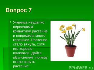Вопрос 7 Ученица неудачно пересадила комнатное растение и повредила много корешк