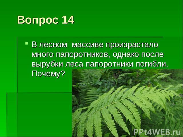 Вопрос 14 В лесном массиве произрастало много папоротников, однако после вырубки леса папоротники погибли. Почему?
