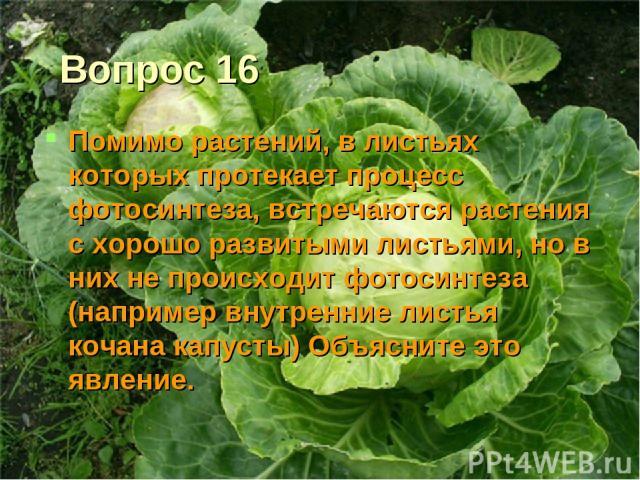 Вопрос 16 Помимо растений, в листьях которых протекает процесс фотосинтеза, встречаются растения с хорошо развитыми листьями, но в них не происходит фотосинтеза (например внутренние листья кочана капусты) Объясните это явление.