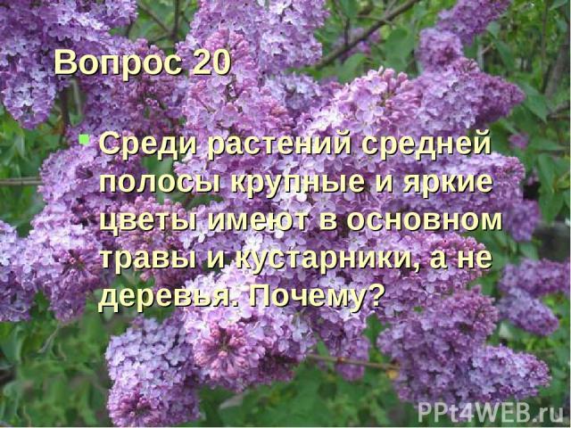 Вопрос 20 Среди растений средней полосы крупные и яркие цветы имеют в основном травы и кустарники, а не деревья. Почему?