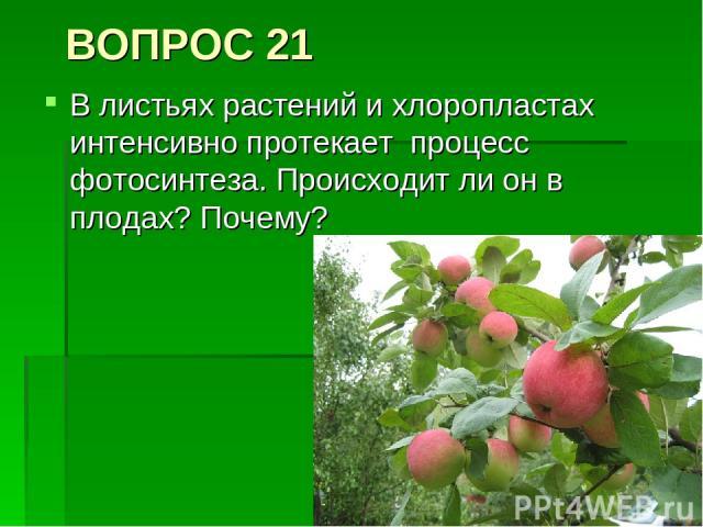 ВОПРОС 21 В листьях растений и хлоропластах интенсивно протекает процесс фотосинтеза. Происходит ли он в плодах? Почему?