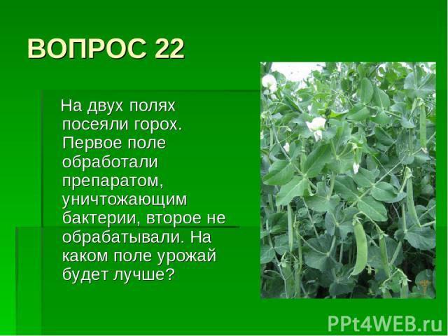 ВОПРОС 22 На двух полях посеяли горох. Первое поле обработали препаратом, уничтожающим бактерии, второе не обрабатывали. На каком поле урожай будет лучше?