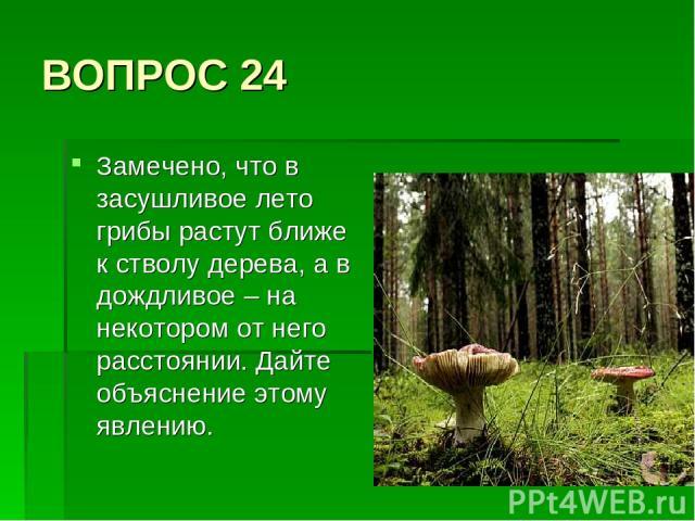 ВОПРОС 24 Замечено, что в засушливое лето грибы растут ближе к стволу дерева, а в дождливое – на некотором от него расстоянии. Дайте объяснение этому явлению.