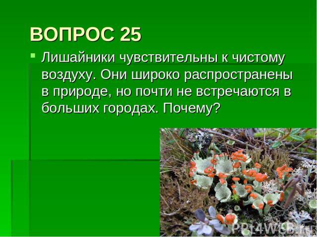 ВОПРОС 25 Лишайники чувствительны к чистому воздуху. Они широко распространены в природе, но почти не встречаются в больших городах. Почему?