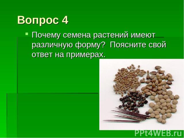 Вопрос 4 Почему семена растений имеют различную форму? Поясните свой ответ на примерах.