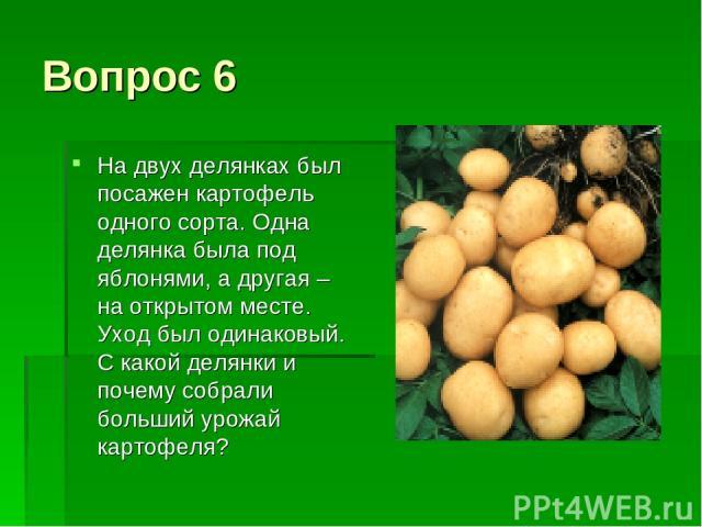 Вопрос 6 На двух делянках был посажен картофель одного сорта. Одна делянка была под яблонями, а другая – на открытом месте. Уход был одинаковый. С какой делянки и почему собрали больший урожай картофеля?