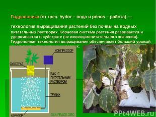 Гидропоника (от греч. hydor – вода и pónos – работа) — технология выращивания ра