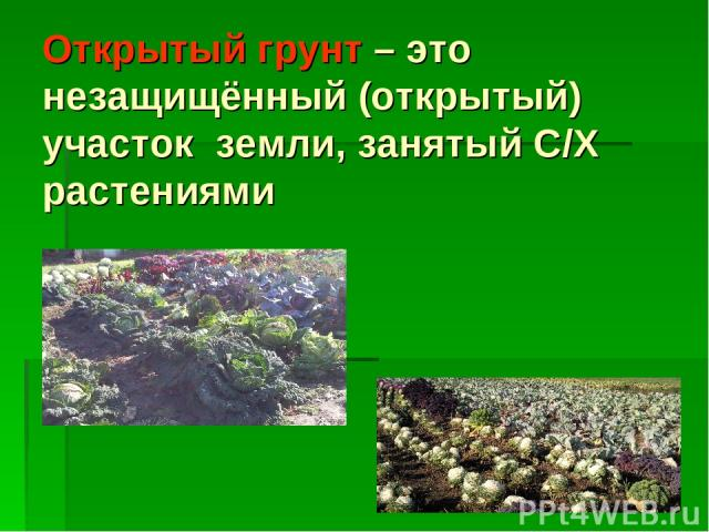 Открытый грунт – это незащищённый (открытый) участок земли, занятый С/Х растениями