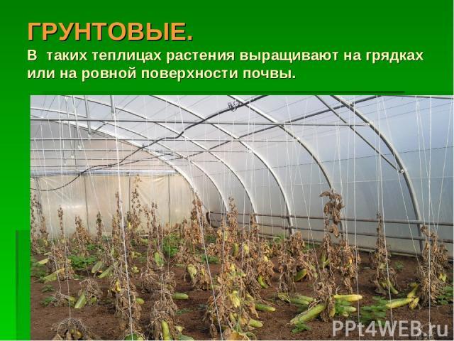 ГРУНТОВЫЕ. В таких теплицах растения выращивают на грядках или на ровной поверхности почвы.
