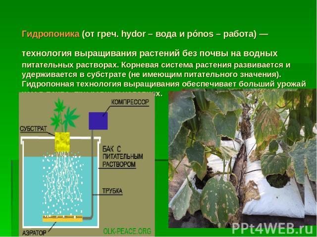 Гидропоника (от греч. hydor – вода и pónos – работа) — технология выращивания растений без почвы на водных питательных растворах. Корневая система растения развивается и удерживается в субстрате (не имеющим питательного значения). Гидропонная технол…