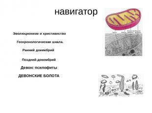 Геохронологическая шкала. принцип Стено (закон напластования): если один слой (п