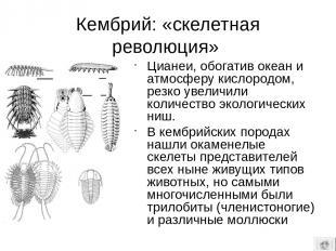 ДЕВОНСКИЕ БОЛОТА – – РОДИНА ТЕТРАПОД Архаичный лабиринтодонт Acanthostega : скел