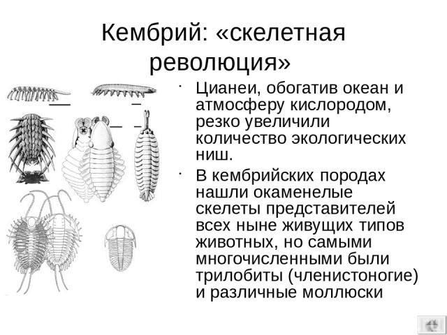 ДЕВОНСКИЕ БОЛОТА – – РОДИНА ТЕТРАПОД Архаичный лабиринтодонт Acanthostega : скелет и реконструкция в естественной обстановке