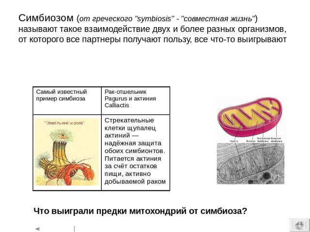 Палеозой: битва гигантов девон Среди плакодерм появились менее бронированные, но скоростные артродиры. Динихтисы достигали 10 м в длину – одни из самых крупных рыб за всю историю силур Ракоскорпионы (например, Pterygotus) достигают длины свыше 2 м (…