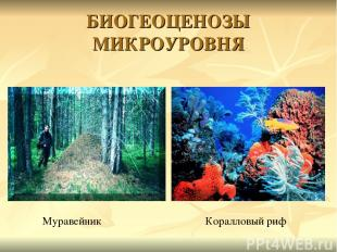 БИОГЕОЦЕНОЗЫ МИКРОУРОВНЯ Муравейник Коралловый риф