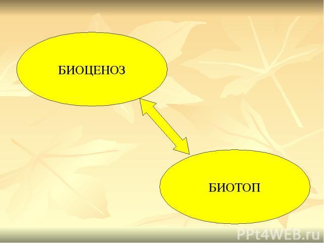 БИОЦЕНОЗ БИОТОП