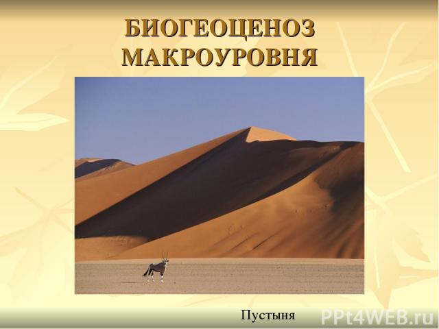 БИОГЕОЦЕНОЗ МАКРОУРОВНЯ Пустыня