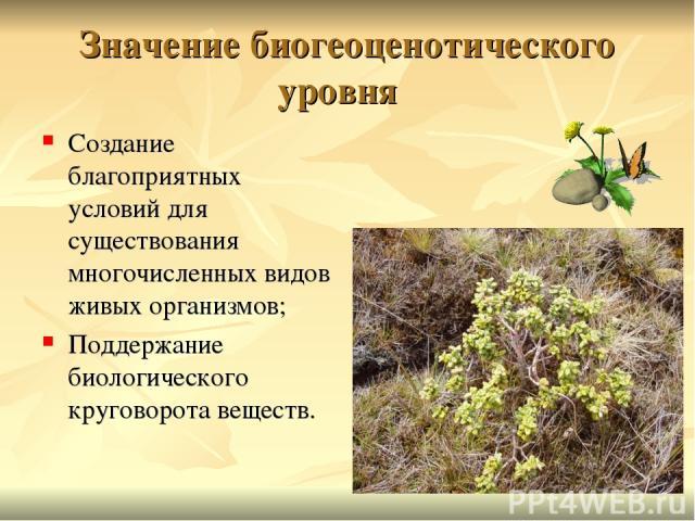 Значение биогеоценотического уровня Создание благоприятных условий для существования многочисленных видов живых организмов; Поддержание биологического круговорота веществ.