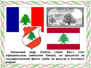 Ливанский кедр (Cedrus Libani Barr.) стал официальным символом Ливана, он красуе