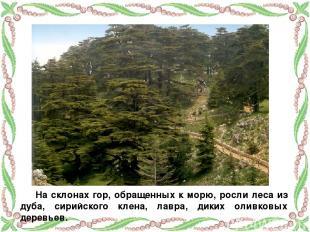 На склонах гор, обращенных к морю, росли леса из дуба, сирийского клена, лавра,