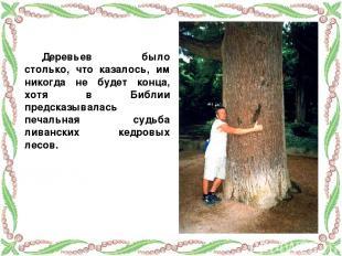 Деревьев было столько, что казалось, им никогда не будет конца, хотя в Библии пр