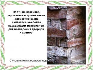 Плотная, красивая, ароматная и долговечная древесина кедра считалась наиболее по