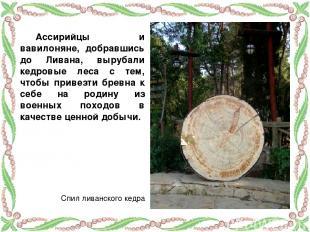 Ассирийцы и вавилоняне, добравшись до Ливана, вырубали кедровые леса с тем, чтоб
