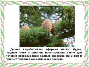 Дерево вырабатывает эфирные масла. Иудеи, позднее греки и римляне использовали м