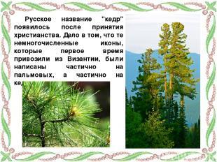 """Русское название """"кедр"""" появилось после принятия христианства. Дело в том, что т"""