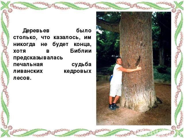 Деревьев было столько, что казалось, им никогда не будет конца, хотя в Библии предсказывалась печальная судьба ливанских кедровых лесов.