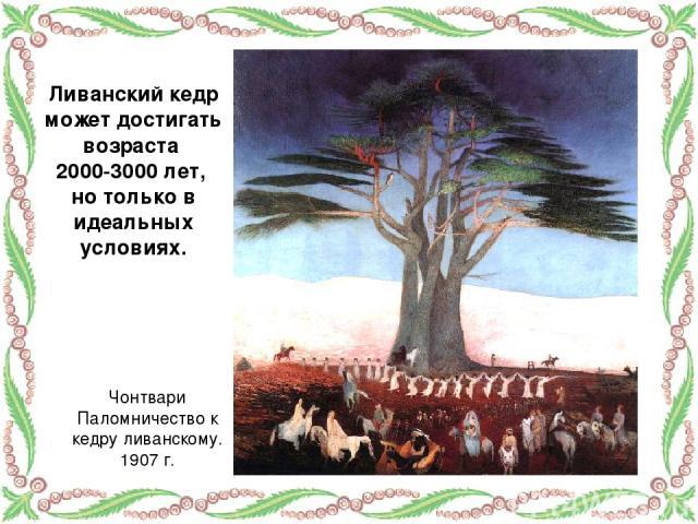 Ливанский кедр может достигать возраста 2000-3000 лет, но только в идеальных условиях. Чонтвари Паломничество к кедру ливанскому. 1907 г.