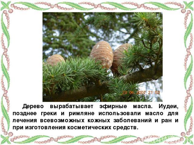 Дерево вырабатывает эфирные масла. Иудеи, позднее греки и римляне использовали масло для лечения всевозможных кожных заболеваний и ран и при изготовления косметических средств.