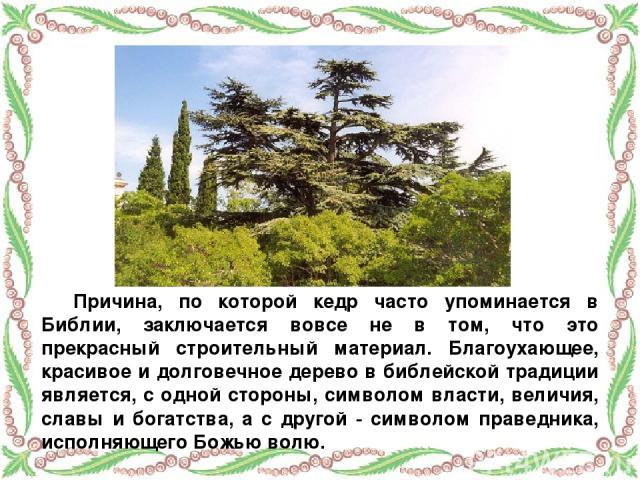 Причина, по которой кедр часто упоминается в Библии, заключается вовсе не в том, что это прекрасный строительный материал. Благоухающее, красивое и долговечное дерево в библейской традиции является, с одной стороны, символом власти, величия, славы и…